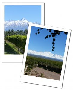 Mountain framed vineyards at Bodega Ruca Malen, Mendoza, Argentina