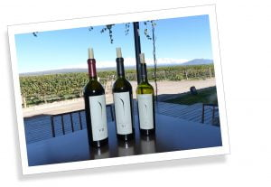 3 Bottles of wine, vineyard at Bodega Ruca Malen, Mendoza, Argentina