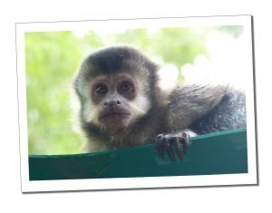A Mono Monkey at Cataratas Station, Iguazu National Park