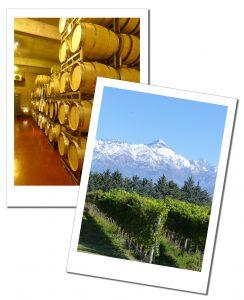 Wine barrels and the vineyard that fills them, at Bodega Ruca Malen, Mendoza, Argentina