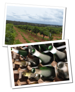 The Vineyard & Dusty bottles from Hunter Valley, 2 Different Wine Tasting Tours in Australia