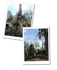 A magnificent ancient ruined Cambodian Temple at Ta Prohm sits moss clad amongst the trees