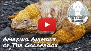 SWWW Galápagos Animals Youtube video