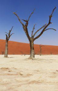Dead Vlei', Sossusvlei, Namibia, Africa