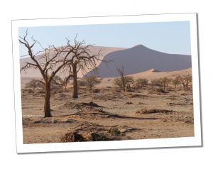 Dead Vlei with its white clay cracked floor was eerie, atmospheric, stunning & awe-inspiring, Namib Naukluft Park
