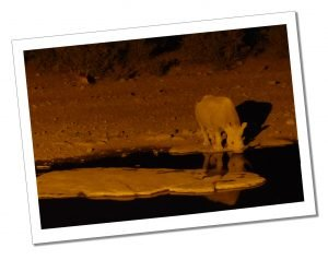 A Rhino at a Water Hole near Halal Camp, Estosha National Park, Namibia