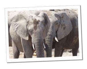 Elephants enjoying the mud at the Water hole, Etosha National Park, Namibia