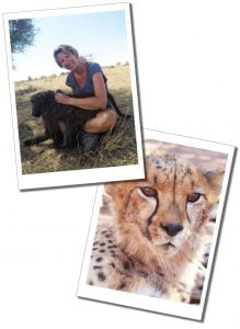 SueWhereWhyWhat Volunteering with Baboons and Cheetah at Na'ankuse Wildlife Sanctuary, Namibia