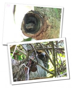 The varied wildlife of the Manuel Antonio National Park, Costa Rica, including tree frogs and sloths
