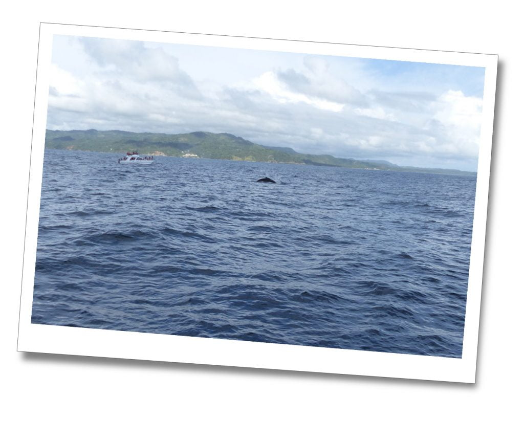 Whale Watching, Dominican Republic. Booked through Whale Samana
