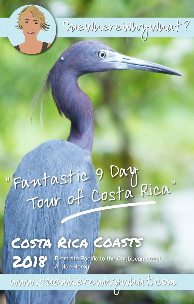 Blue Heron, Manuel Antonio National Park, Costa Rica