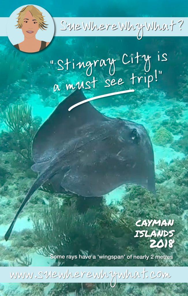 Stingray, Grand Cayman, Caribbean