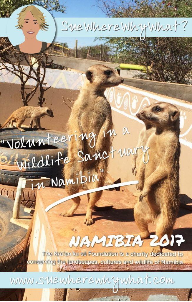 Meerkats, N/a