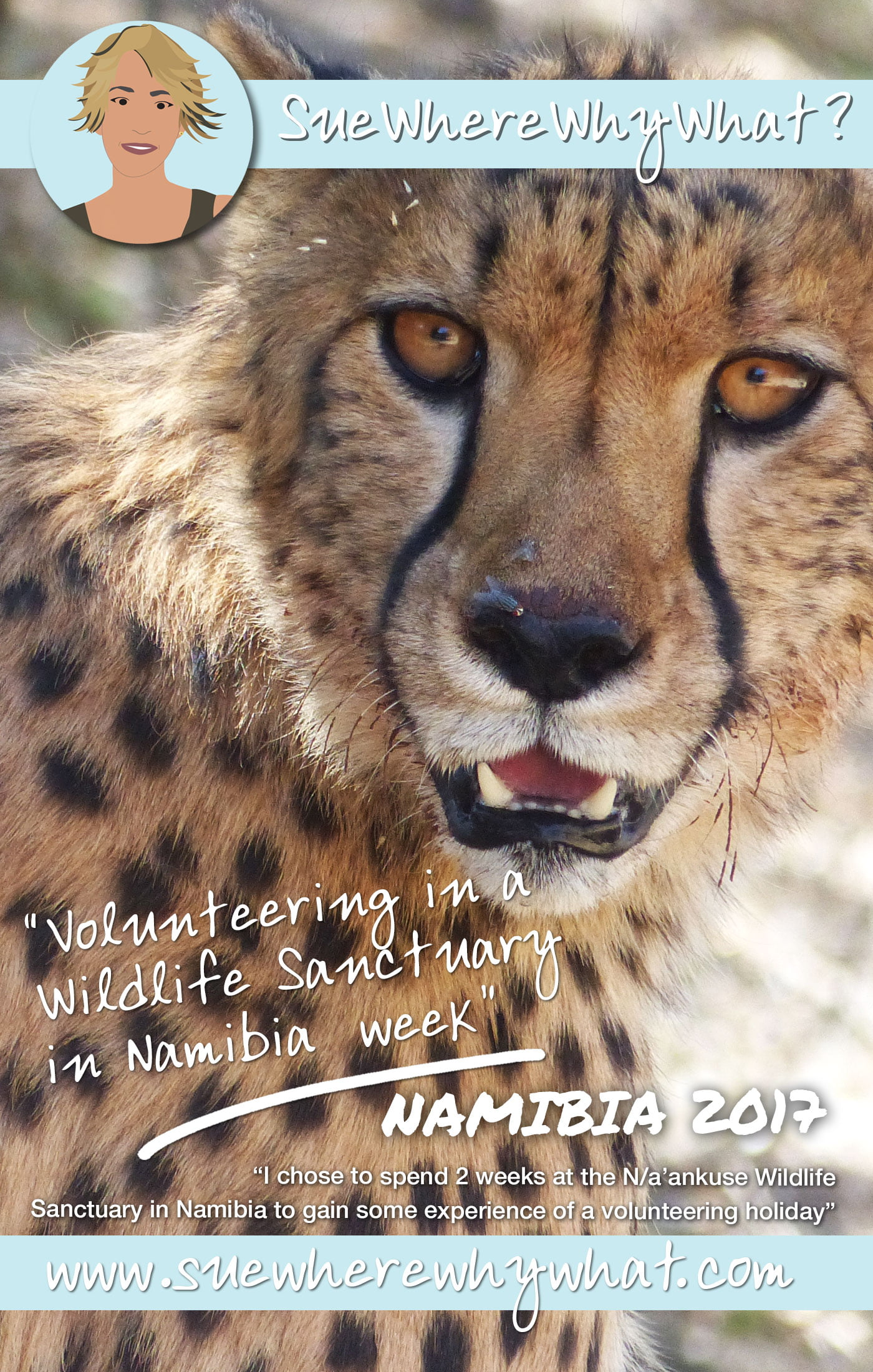 Volunteering at a wildlife sanctuary in Namibia – Week Two