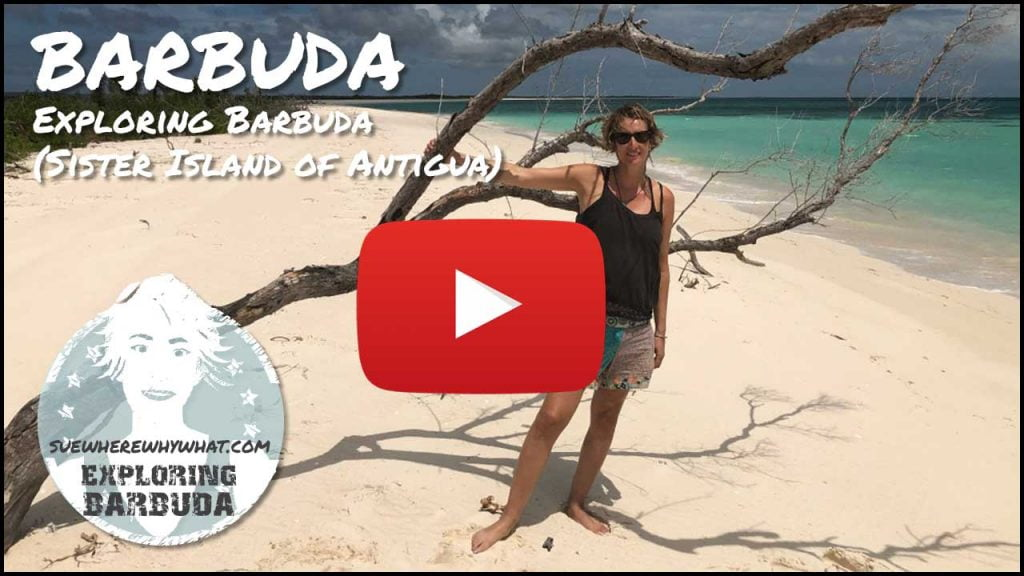 Exploring Barbuda (Sister Island of Antigua) - Caribbean