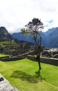 A Single tree on a lawn with Machu Picchu behind