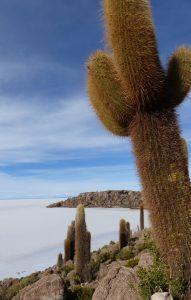 Cactus Island, Inca Huasi, Bolivia