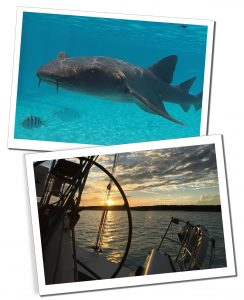Shark in the sea & view from a boat, Compass Cay, Bahamas, Best of the Bahamas