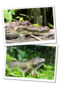 The Prehistoric wildlife of the Tortuguero National Park, Costa Rica