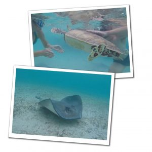 Underwater turtle & Wray at Farmers Cay, Bahamas, Best of the Bahamas