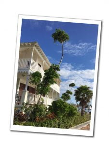 A house and Palma trees in Grand Bahama, Bahamas, Best of the Bahamas