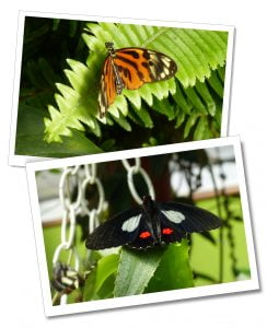 Butterflies, Mindo Ecuador