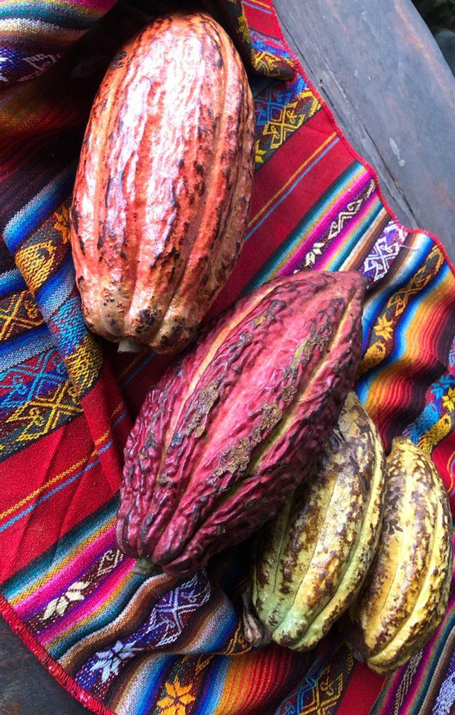 Red & Yellow Cacao Fruit, Ecuador