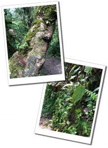 Flora and Forna, Mindo, Ecuador