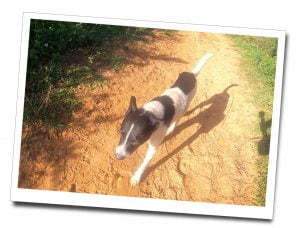 A small black & white dog joined the Hiker's for part of the way, Sunrise Hike, Viñales, Cuba