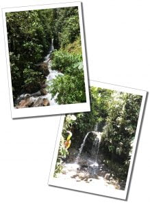 Waterfalls, Flora and Forna, Mindo, Ecuador