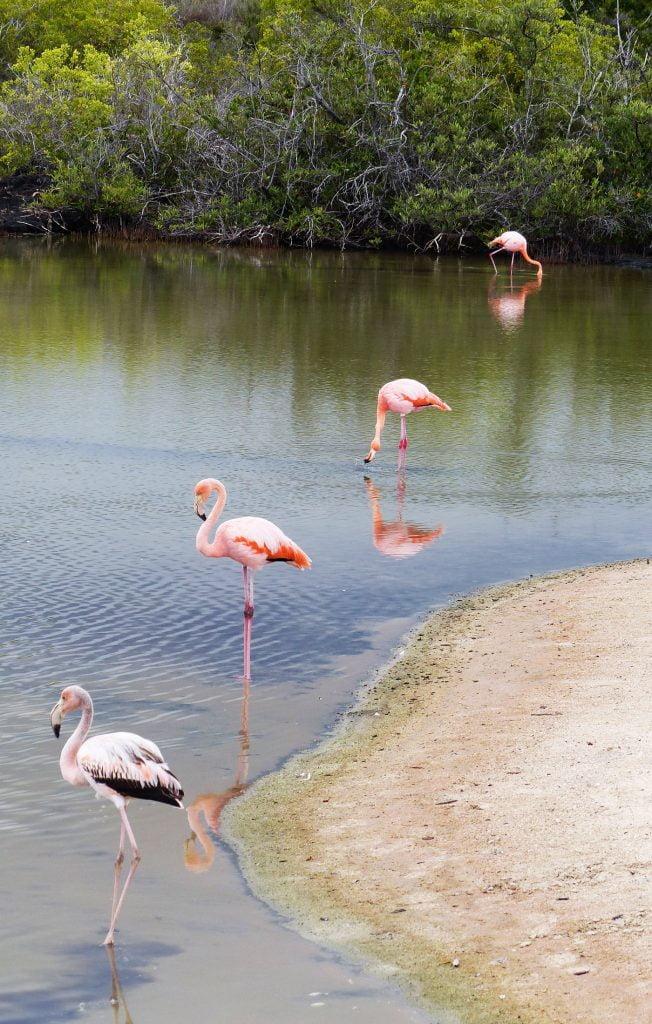 Day 1, 4 Flamingoes, Santa Cruz