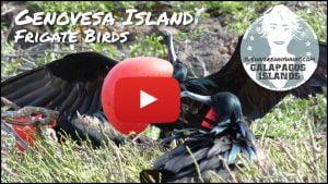 The Galápagos Islands, Genovesa Island - Ecuador, South America
