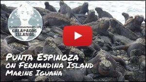 The Galápagos Islands, Fernandina Island - Ecuador, South America