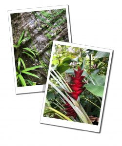 Flora and Forna at Syndicate Parrot reserve, Dominica, national parks, Caribbean