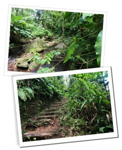 The Waitukubuli Trail, Dominica, Caribbean