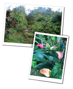 Beautiful foliage of Wooton Waven, Dominica, Caribbean