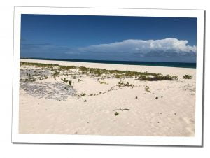 Deserted sandy beach, Everything You Need To Know Before Visiting Barbuda