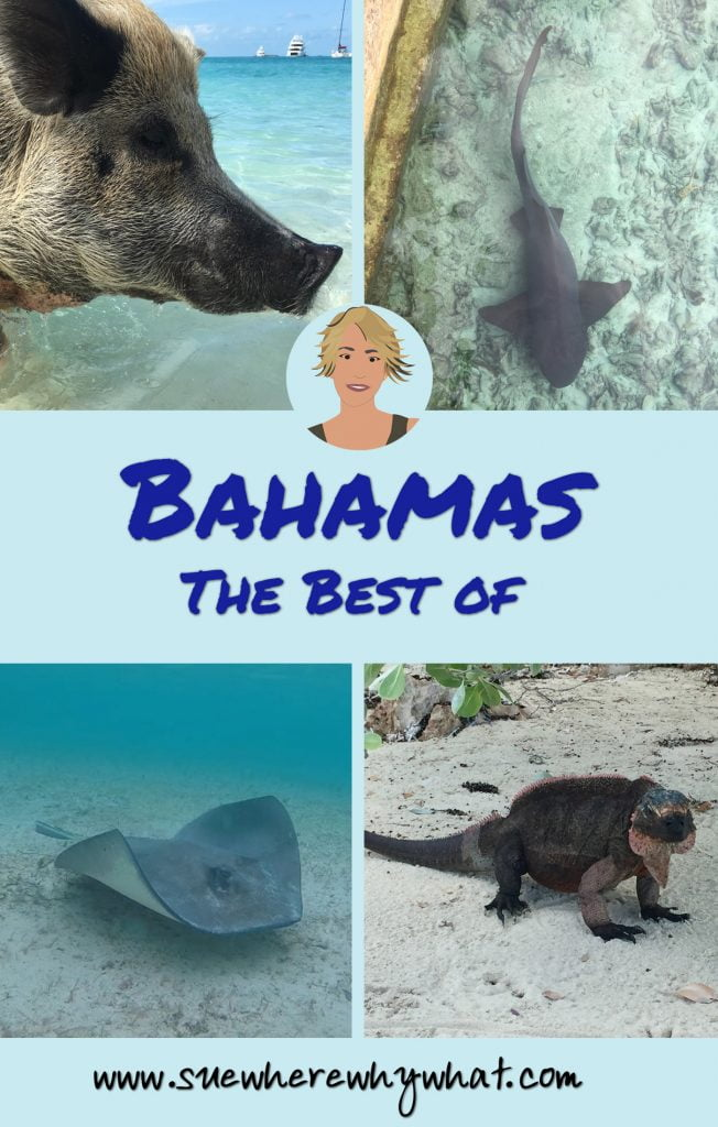 Swimming Pig, Shark, Sting Ray and Iguana, Bahama
