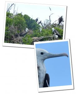 Frigate Bird Sanctuary, Barbuda, A Day Trip To Barbuda – Reasons Not To Miss