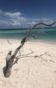 Tree, Princess Diana Beach, Barbuda
