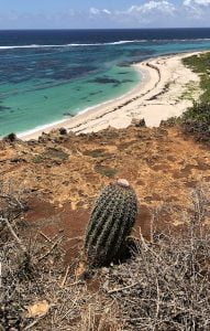 Cactus, two foot bay, Barbuda
