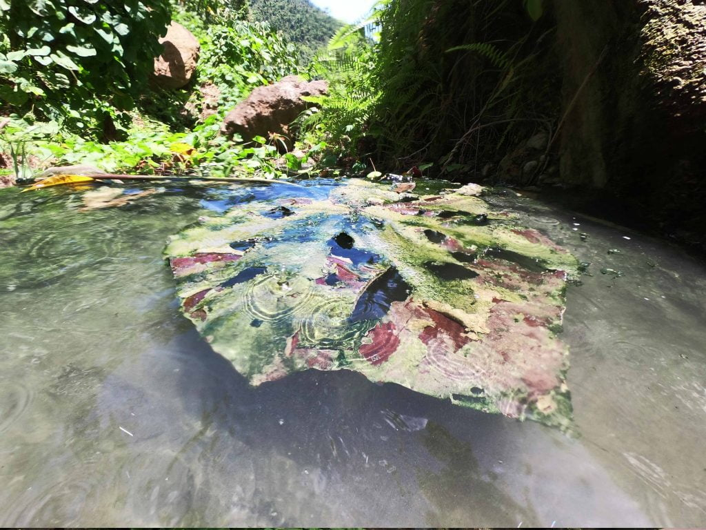 A giant hole riddled leaf floating at the Secret Spa, Dominica