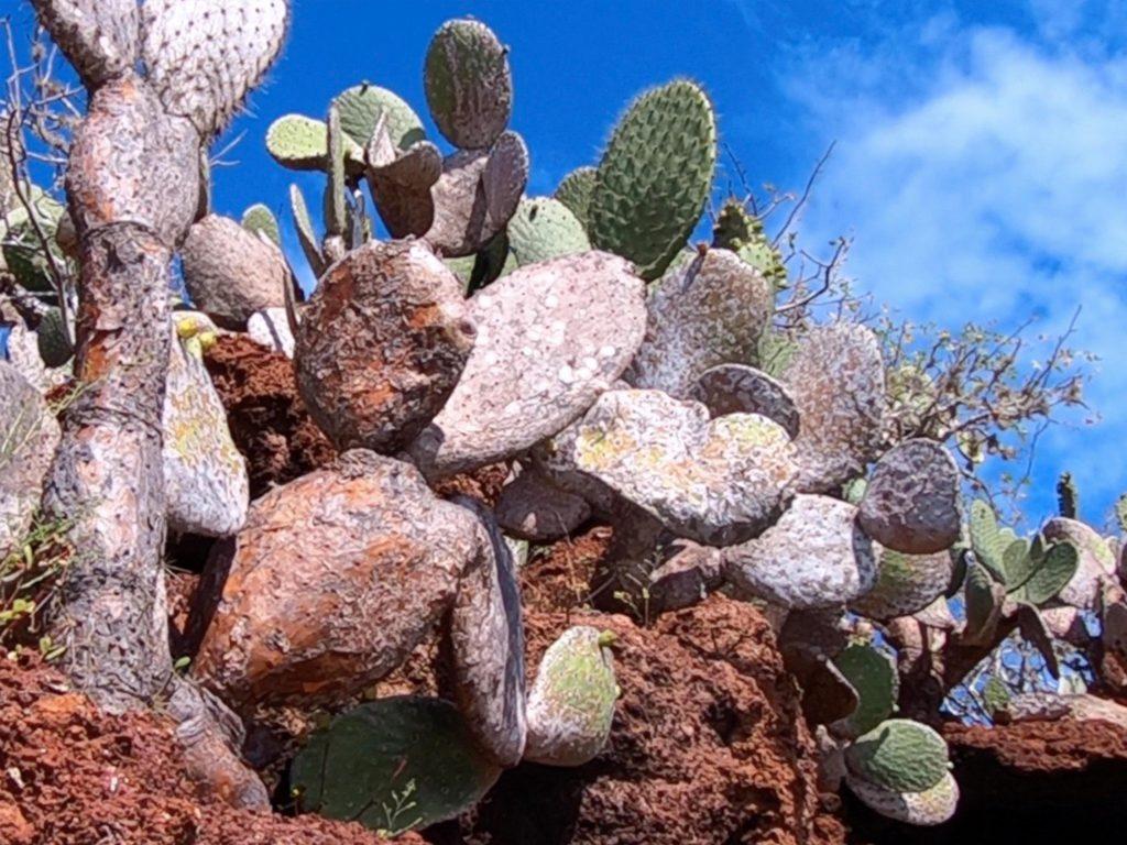 Rabida Island, Galápagos Islands