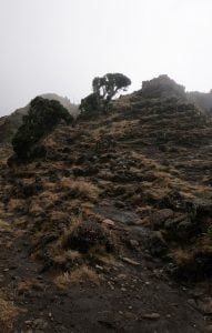 Climbing Mount Kilimanjaro in 8 Days – Lemosho Route