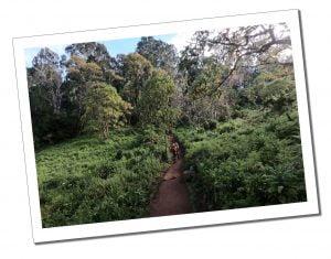 SWWW and Brigitte, hiking, Lemosho Gate, Mount Kilimanjaro, day 1