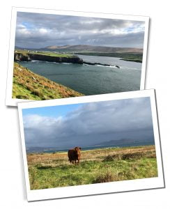 The sea and a lone highland cow in the wilds of The Ring of Kerry