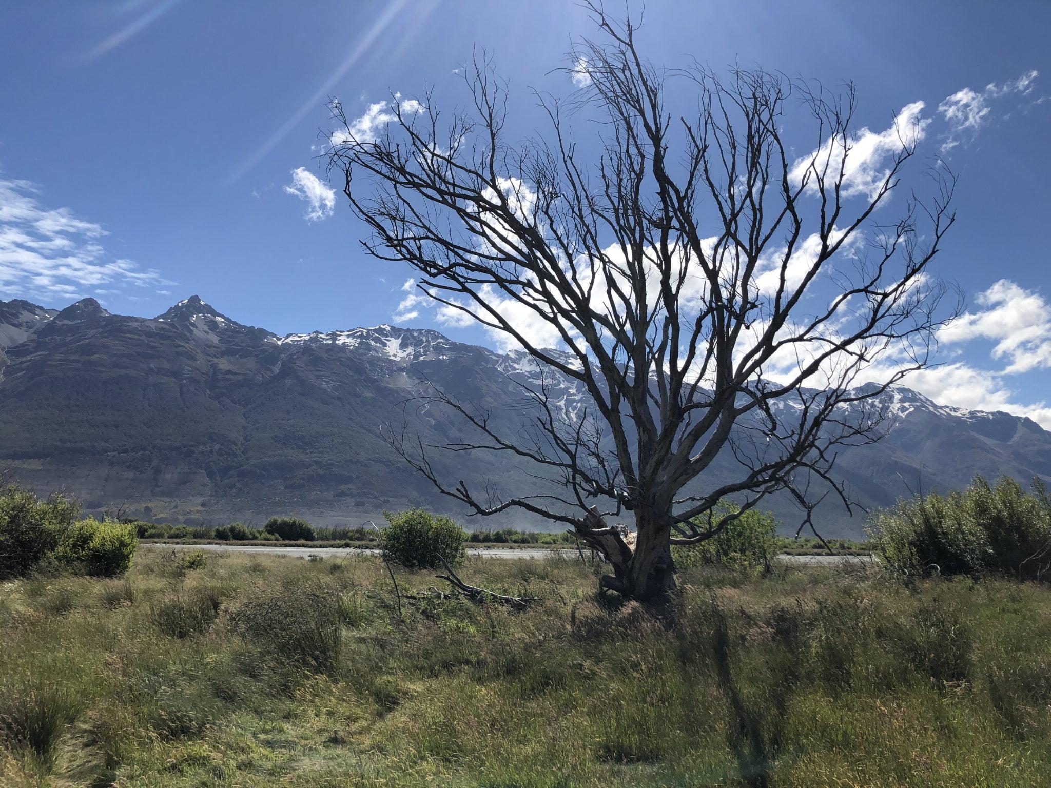 Glenorchy Tree, New Zealand