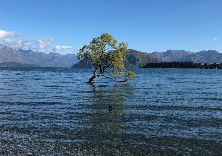Wanaka Tree, Lake Wanaka