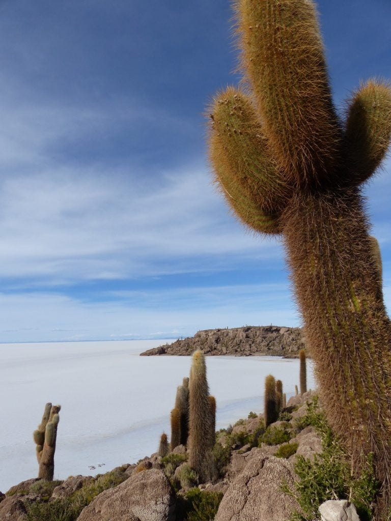 Island Incahuasi, Salt Flats, Bolivia