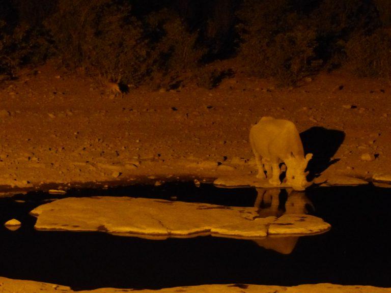 Rhino at the water hole, night safari, Namibia